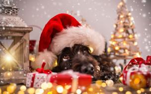 фонарь, блестки, блики, ёлка, подарки, колпак, собака, голова