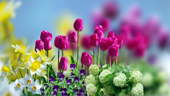 тюльпаны, нарциссы, фиалки
