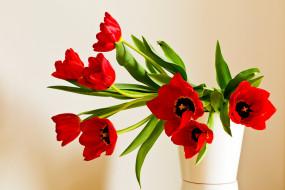 цветы, тюльпаны, красные, лепестки, букет