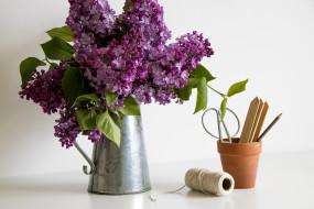 цветы, сирень, лейка, букет