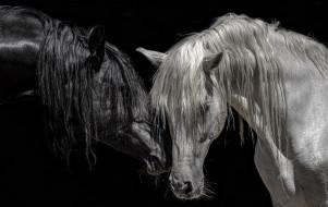 фон, цвет, кони, природа