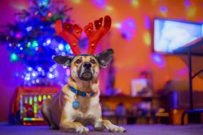 животные, собаки, праздник, собака, друг, новый, год, рога