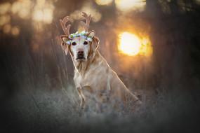 животные, собаки, деревья, отражение