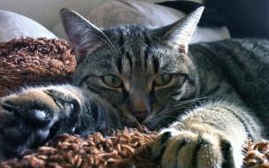 животные, Кот