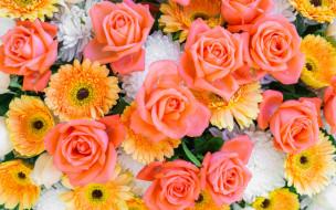 герберы, астры, цветочный фон, розы, желтые цветы, хризантемы