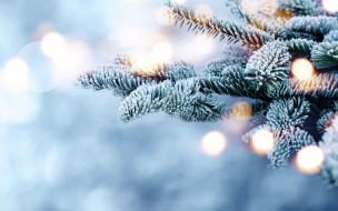 fir tree, bokeh, ветки, winter, елка, зима, снег, snow, мороз