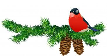 векторная графика, птицы , птицы, птица, ветки