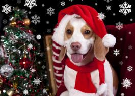 тепло, елка, dogs, шапка, бигль, Holidays, собака
