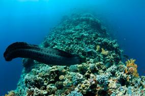 вода, белая, подводный, мир, Shark, мурена, рыба
