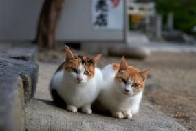 животные, кот, коты