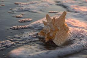 закат, берег, ракушка, вода, пена, макро, прибой, песок, свет