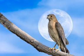 луна, ветка, птица