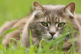 Кот обои для рабочего стола 2048x1365 кот, животные, коты