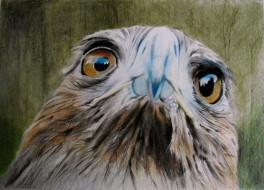 птица, фон, взгляд