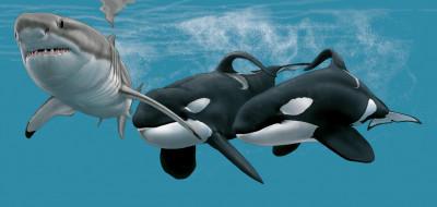 рисованное, животные, касатка, акула, shark, мир, подводный, белая, вода, рыба