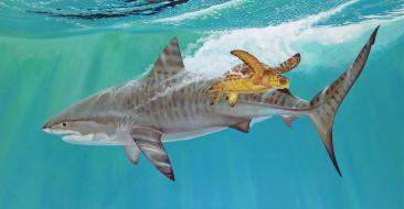 рисованное, животные, мир, подводный, shark, черепаха, тигровая, вода, рыба, акула