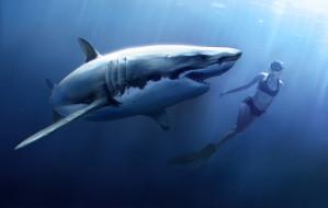 обои для рабочего стола 2000x1275 рисованное, животные, пловец, девушка, акула, рыба, вода, челюсти, подводный, мир, аквалангист, attack, shark