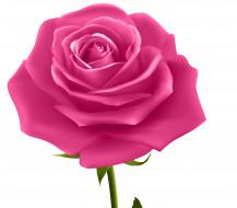 обои для рабочего стола 3858x3390 векторная графика, цветы , flowers, фон, роза, лепестки