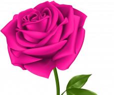 обои для рабочего стола 3775x3142 векторная графика, цветы , flowers, фон, лепестки, роза
