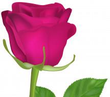 обои для рабочего стола 4326x3828 векторная графика, цветы , flowers, фон, лепестки, роза