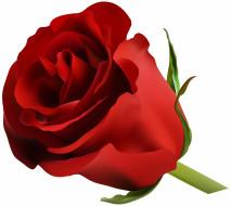 роза, лепестки, фон