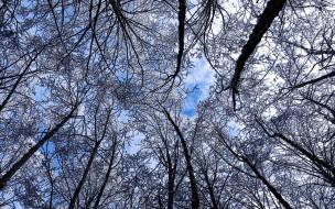 небо, верхушки, облака