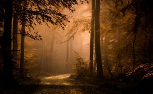природа, лес, туман, осень