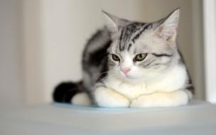 Кот обои для рабочего стола 1920x1200 кот, животные, коты