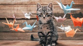 Кот обои для рабочего стола 1920x1080 кот, животные, коты