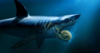 подводный, мир, вода, рыба, мутант, существо, attack, акула, челюсти, монстр, Shark