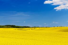 поле, простор, облака, лето