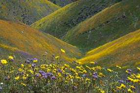 цветы, луг, горы