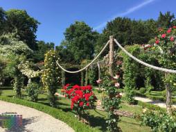 2018, цветы, деревья, растения
