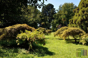 2018, деревья, парк, растения