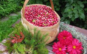 туесок, георгины, клюква, ягоды