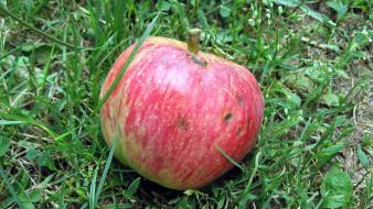 трава, яблоко