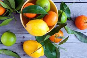 лайм, лимон, мандарин