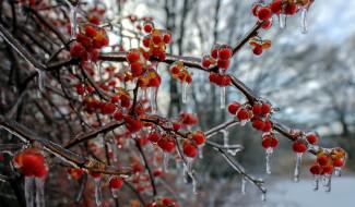 лед, ягоды, сосульки