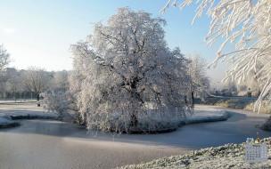 зима, снег, деревья, 2018