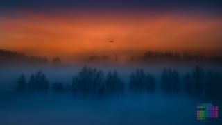 туман, самолет, 2018, деревья