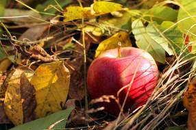 листья, осень, яблоко