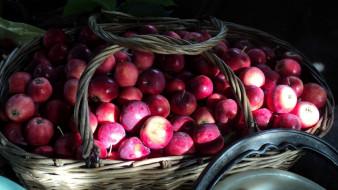 корзина, яблоки, урожай