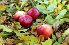 еда, Яблоки, яблочки