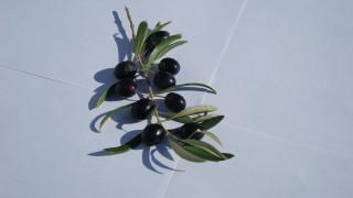 ветка, оливковая