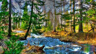 календари, природа, водоем, деревья, 2018