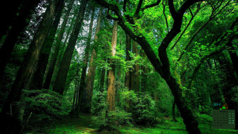 лес, 2018, деревья