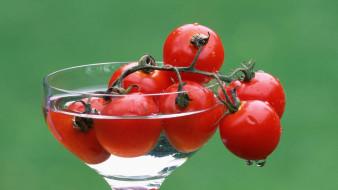 ветка, томаты, вода, бокал, помидоры