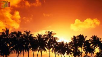 2018, пальма, закат