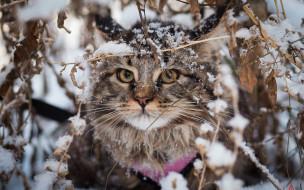 кот, снег, ветки, сучья, листья