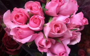 бутоны, розы, розовые